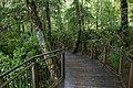 Forest in Fiordland National Park, New Zealand 01.jpg