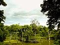Forest lake (3219887761).jpg