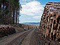 Forestry operations - geograph.org.uk - 1376501.jpg