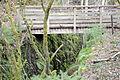 Fréier Minièresbunn am Burgronn-104.jpg