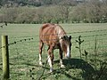 Friendly pony at the Brockhill Road - geograph.org.uk - 466609.jpg