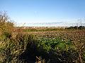 Frontignan vigne automne.jpg
