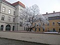 Frost on tree, former Franciscan monastery courtyard, 2017 Varkerulet.jpg