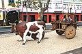 Funchal vintage celebration Madeira 2016 5.jpg