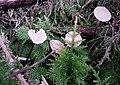 Fungi (38721770084).jpg