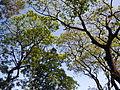 FvfSanFernandoPampanga0791 08.JPG