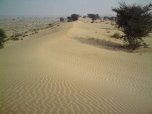 Sri Ganganagar - Irrigation has made Ganganagar greener but sandy dunes can still be seen. A photo taken in Gharsana tehsil.