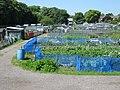 Garden allotments - geograph.org.uk - 1368511.jpg