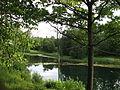 Gatchina. Silver Lake.jpg