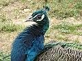 Gaziantep Zoo 1260057.jpg