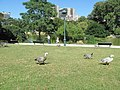 Geese on the lawns of Parc Montsouris.jpg