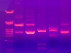 Biología molecular? ¿Qué es?