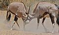 Gemsboks (Oryx gazella) (6482387993).jpg
