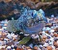 Genoa - aquarium 5.jpg