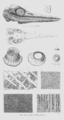 Geology and Mineralogy considered with reference to Natural Theology, plate 10.png