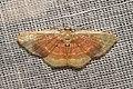 Geometridae (15872011347).jpg