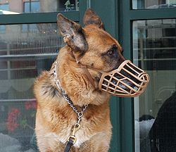 Dog Muzzles To Stop Eating Rubbish Uk