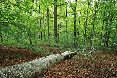 Geschützter Landschaftsbestandteil Schubertgrund in Sachsen.2H1A1107WI.jpg