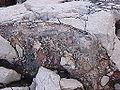 Gestein mit rotem Streifen bei Methoni 3.JPG