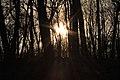 Gfp-iowa-pikes-peak-state-park-sunlight-through-trees.jpg