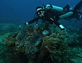 Giant Clam Tridacna Gigas 2.jpg