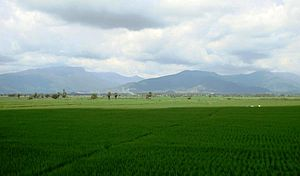 Paddy field - Paddy fields in Tamil Nadu, India