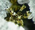 Gold-278451.jpg