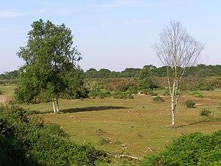 Gorley Hill