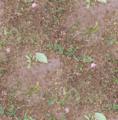 Grass seamless.png