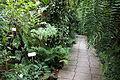 Greenhouse interior - Botanischer Garten, Dresden, Germany - DSC08510.JPG