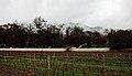 Groot Constantia - panoramio (5).jpg