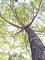 HK CWB 銅鑼灣 Causeway Bay 維多利亞公園 Victoria Park tree trunk n green leaves December 2019 SSG 43.jpg