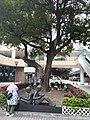 HK CWB Causeway Road Moreton Terrace tree April 2021 SS2 01.jpg