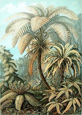 Папоротники ботаническая