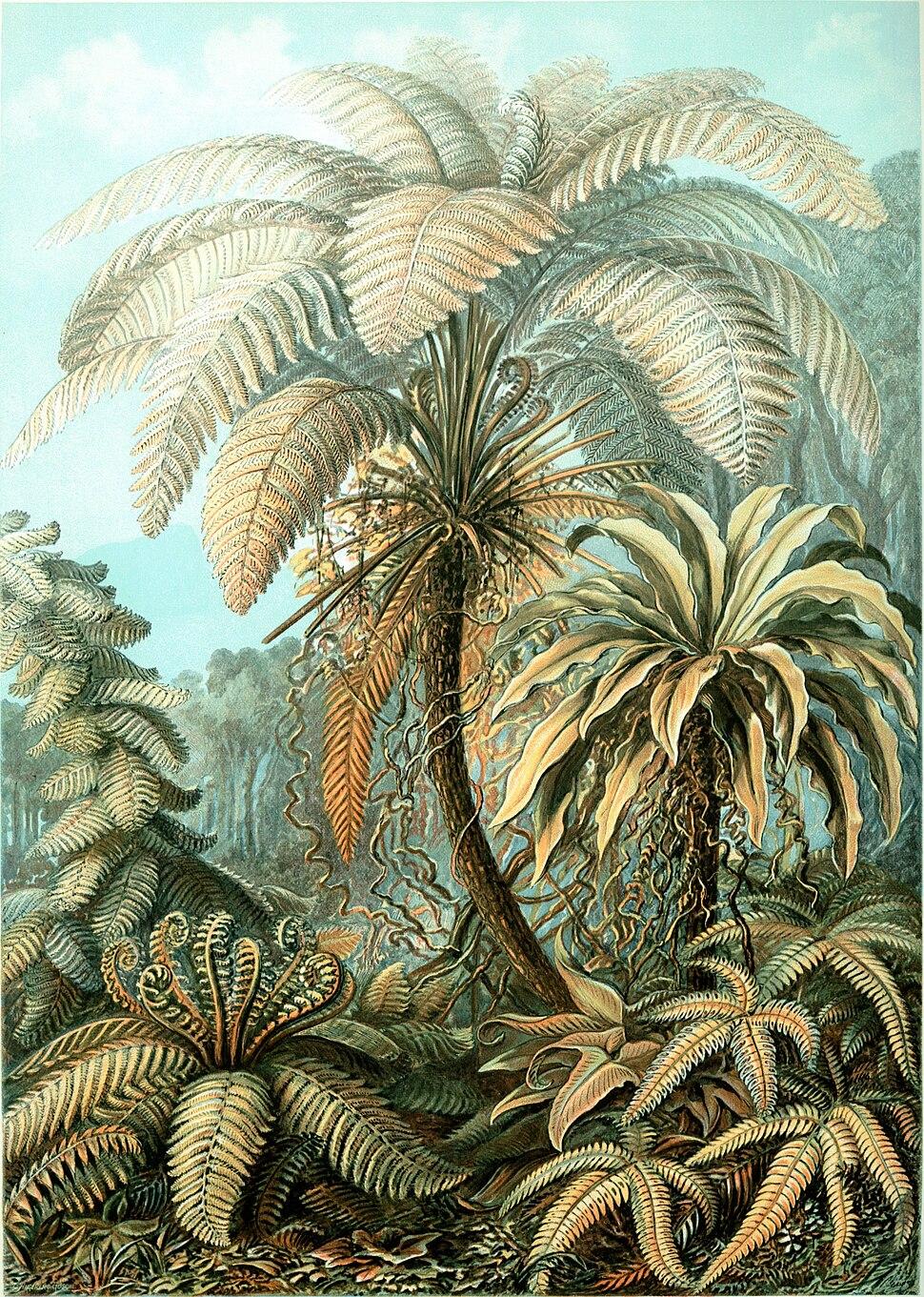 Haeckel Filicinae 92
