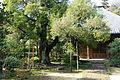 Halls - Jufukuji - Kamakura, Kanagawa, Japan - DSC07956.JPG