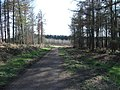 Haw Park Woods. - geograph.org.uk - 151770.jpg