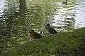 Herbert Park, Ballsbridge, Dublin (1001035532).jpg