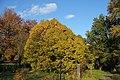 Herbst im Rombergpark - panoramio (3).jpg