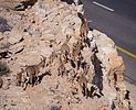 Herd of Nubian ibex along a cliff by a road (50743).jpg