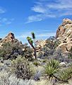 Hidden Valley, Joshua Tree NP 4-13 (15196640920).jpg