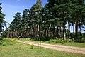 High Wrong Corner, Thetford Forest - geograph.org.uk - 514451.jpg