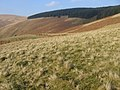 Hillside above Glensalloch Burn - geograph.org.uk - 697911.jpg