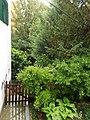 Himfy utca 7, garden, south 2019 Szentimreváros.jpg