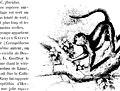 Histoire naturelle des mammifères, avec l'indication de leurs moeurs, et de leurs rapports avec les arts, le commerce et l'agriculture; (1854) (17760707600).jpg