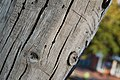 Holzstruktur Holzpfahl.jpg