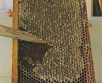 Honey-miel-cadre-opercule.jpg