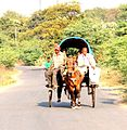 Horse cot.jpg
