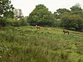 Horses, Knaworthy - geograph.org.uk - 981537.jpg