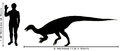 Human-thescelosaurus size comparison.png